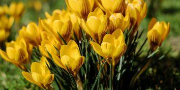 Vårens nyhetsbrev